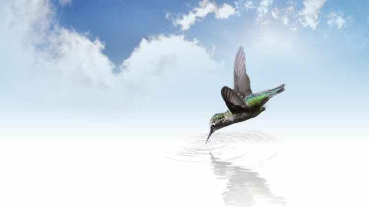 hummingbird-bird-fly-wing.jpg